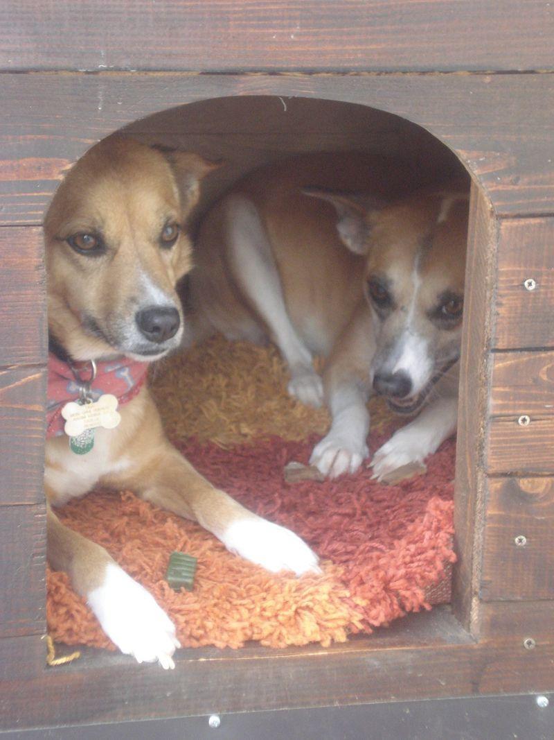 Stolen dog house
