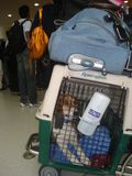 Tommy with alex luggage jfk 4jun11